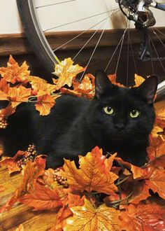 Fall is for hiding in the leaves