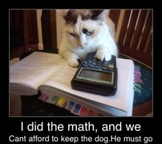 Dog must go - www.meme-lol.com  #animals #catsanddogs #love
