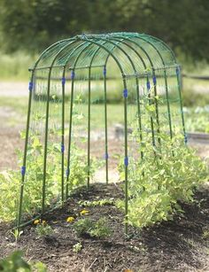 Pea Tunnel from Gardener's Harvest Supply. $39.95. Easy no tool assembly and takes 4 square feet only.