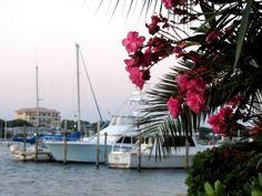 181 listings: Destin FL real estate, condos & homes for sale. Search Emerald Coast and homes online using established Destin realtors at Destin Real Estate, LLC Destin Florida, Florida Beaches, Condos For Sale, Beach Photos, Luxury Homes, Celebration, Real Estate, Luxurious Homes, Luxury Houses