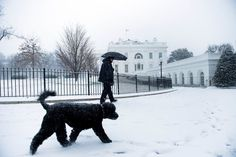 Bo And Sunny Obama Are Having A Great Snow Day.