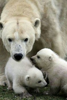 Protecting Her Sweet Babies!
