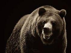 Znalezione obrazy dla zapytania bear roar