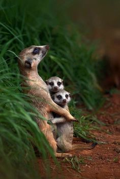 These Touching Photos Of Animal Families Will Completely Melt Your Heart Tierfamilien Nature Animals, Animals And Pets, Wild Animals, Small Animals, Groups Of Animals, Photos Of Animals, Animals Planet, Happy Animals, Beautiful Creatures