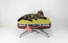 #cozy #vintage #pet #suitcase #upcycled #petbed #bed #home #deco