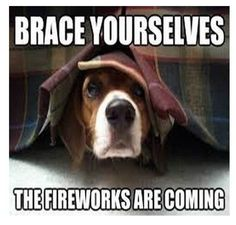 (PET CARE/PET SAFETY) The of July holiday is the busiest time of the year for animal shelters. Tips to keep your pet dog calm and safe during fireworks. Fourth Of July Pics, 4th Of July Images, Funny 4th Of July, July 4th, October, Art Beagle, Beagle Dog, Funny Fireworks, Brace Yourself