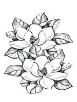 Free Printable Magnolia Coloring Pages Select One Of 1000 The Category Flowers