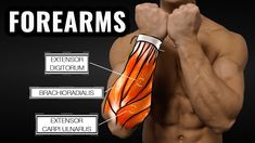 The 5 Best Exercise To Increase Forearm Size And Strength Forearm Workout, Biceps And Triceps, Our Body, Barbell, Body Parts, Bodybuilding, Strength, Told You So, Muscle