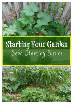 Turn your brown thumb to green with these seed starting basics!  The Homesteading Hippy #homesteadhippy #fromthefarm #garden