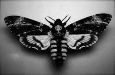Moth, Skull, Silence of the Lambs