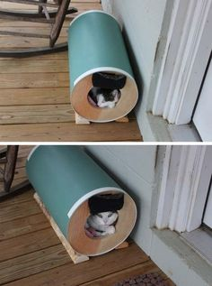 Outdoor Cat House: Even Stray Cats Need Love