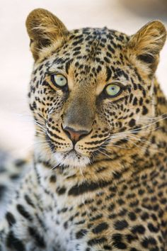 Portrait of Choetta by Tambako The Jaguar on Flickr