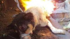 Stop the killing and torchering dogs and puppies who hv no idea whats going to happent to them! It is completely inhuman! I want a law which can sentence the person to prison for taking part in the festival!