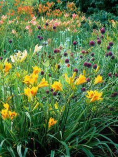 Embrace high-contrast flower combos!