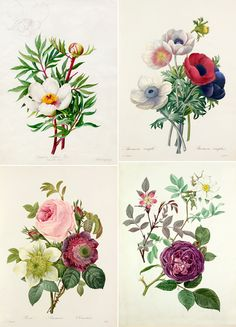 Floral illustrations from 18th and 19th centuries #flower #tattoo #flowertattoos #tattooideas
