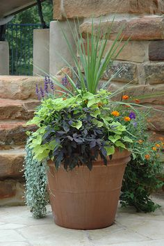 "Despite being a colorful, interesting combination, these plants are all suitable  for xeriscaping. You may be surprised to know that those lime green leaves, and also the ""black"" ones are actually varieties of sweet potatoes. Their large tubers make them drought tolerant. jpetersongardendesign, via Flickr"