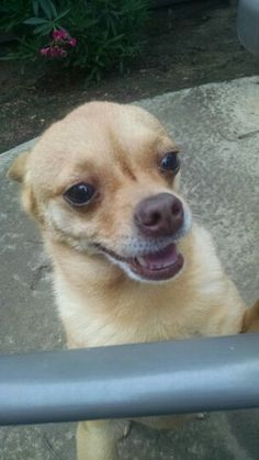 Pic of My DOG his name is STARBUCKS!!!