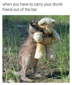 Adorable Orphaned Kangaroo Hugs Teddy Bear In Viral Photo. We Can't Make This Stuff Up Adorable Orphaned Kangaroo Hugs Teddy Bear In Viral Photo. We Can't Make This Stuff Up Cute Creatures, Beautiful Creatures, Animals Beautiful, Cute Baby Animals, Animals And Pets, Funny Animals, Tier Fotos, Pet Birds, Mammals