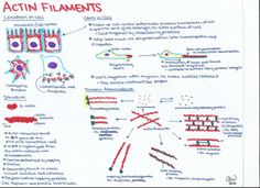 CELL BIOLOGY REVISION