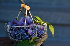 Ameixas, Frutas, Cesta De Frutas, Azul, Violet, Ameixa