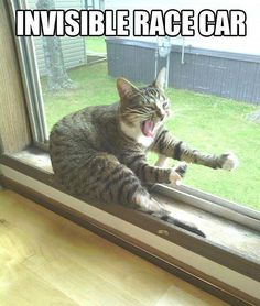 Funny cat - Invisible race car - http://jokideo.com/funny-cat-invisible-race-car/