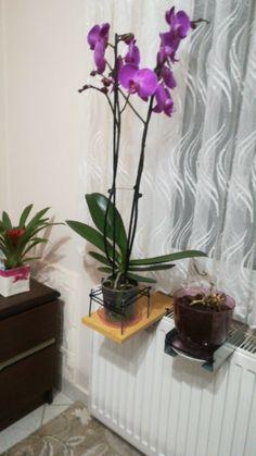 Interior Design Living Room, Margarita, Flowers, Plants, Diy, Decor Ideas, Imagenes De Amor, Planters, Home