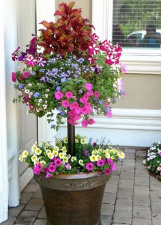 By the front door - this planter says welcone home! Planter with stem basket - This is really cool looking! A living topiary with flowers! Container Plants, Container Gardening, Succulent Containers, Container Flowers, Container Size, Deco Floral, Small Space Gardening, Plantation, Garden Planters