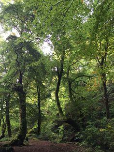 Green power, Scotland