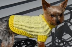 Summer Yellow Hand Knit Dog Sweater  SMALL by KOCouture on Etsy