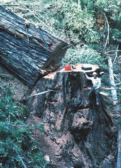 Jerry Beranek for Don Sundstrom at Groshen Gulch..Gualala Redwoods..June 1991.