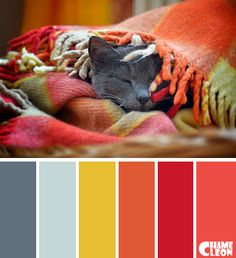 Color Palette, cat, rug, orange, red, pistachio green, gray.