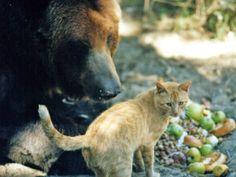 Griz and Cat, a heart-warming and amazing chapter in a Southern Oregon wildlife sanctuary's history.