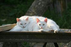 2 white beauties