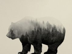 Bear In The Mist Art Print by Andreas Lie | Society6