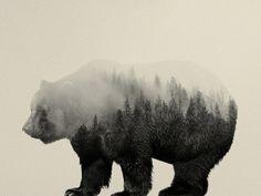 Bear In The Mist Canvas Print