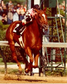 Affirmed and Steve Cauthen winning the Kentucky Derby in 1978, en route to becoming the 11th, and most recent Triple Crown winner