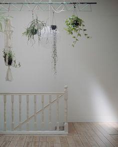 Hanging Plants In My Sunroom...