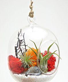 "Bliss Gardens Air Plant Terrarium Kit with Geode Crystal 6"" Oval Glass Globe / Sunburst on Ice"
