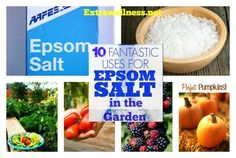 Here are the top 10 Important Gardening Tips And Uses for Epsom salt that will convince every gardener on the benefits of using Epsom salt in their organic garden..