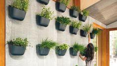 Culture intérieure de plantes et d'aromates ©Archiblox