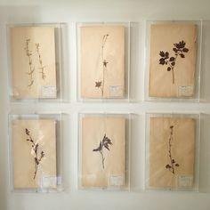 A set of six botanical prints displayed in a clients bright and airy hallway by Matilda Goad www.matildagoad.com Bathroom Vinyl, Antique Frames, Acrylic Box, Box Frames, Matilda, Botanical Prints, Objects, Framed Prints, Jada