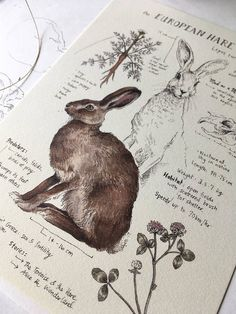 Natural Study European Hare Print 5x7