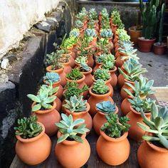 Lembrancinhas de suculentas Succulent Gardening, Succulent Pots, Cacti And Succulents, Garden Planters, Planting Succulents, Cactus Plants, Terrarium Plants, Succulent Arrangements, Cactus Y Suculentas