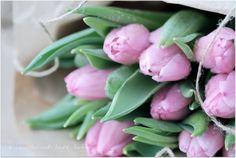 I år har jeg kjøpt en kalender hvor det stårat her i Sverige er Tulipanens dag den 15. januar. Så googlet jeg litt om denne merkedagen, men fant fort ut at datoen varierer.., at Tulipanens dag i Norge er den andre fredagen i januar… eller? Ja og da ble jeg litt småforvirret av det hele...Continue