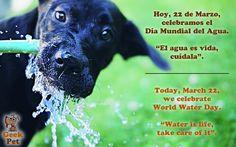 """Hoy, 22 de Marzo, celebramos el Día Mundial del Agua. """"El agua es vida, cuídala"""". #startup #diadelagua #waterday"""