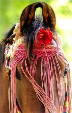 The Marwari is an ancient breed from Rajasthan, and the warrior mount of rulers.