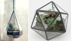 geometric terrariums for your home
