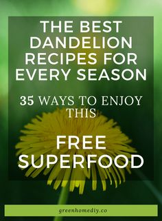 The best dandelion recipes for every season: 35 tasty ways to use this free superfood all year long - Green Home DIY Dandelion Pesto Recipe, Dandelion Recipes, Dandelion Jelly, Dandelion Wine, Survival Stuff, Survival Food, Eating Dandelions, Warm Bacon Dressing, Buy Seeds