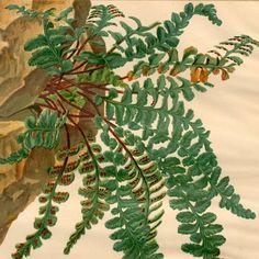 planta de helecho botánico antiguo original por antiqueprintstore