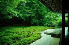 #kyoto #japan #kyotojapan #kyototemple #building #green #beautiful #picture #instagram  #instagood #instagramers #loves_united_members #lovekyoto #lovejapan #japanesegarden #japanesestyle #rurikoin #lightandshadow #followme #nikon
